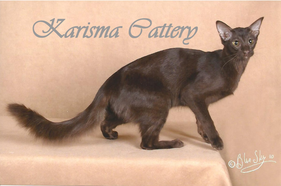 Chatterie Karisma Cattery